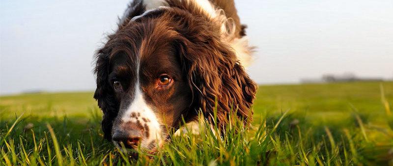 Conosci l'Olfatto del Cane?